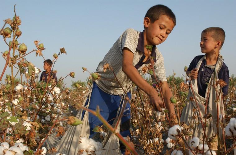 UZBEKISTAN trabalho infantil algodão